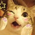 Meow_km