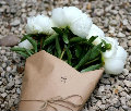 Tulip1987